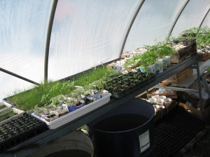 a view from within the greenhouse