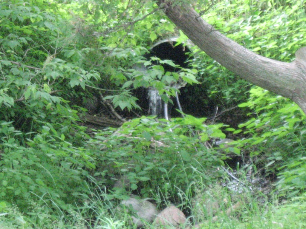 We are able to irrigate the garden by syphoning water from two ponds without a pump!